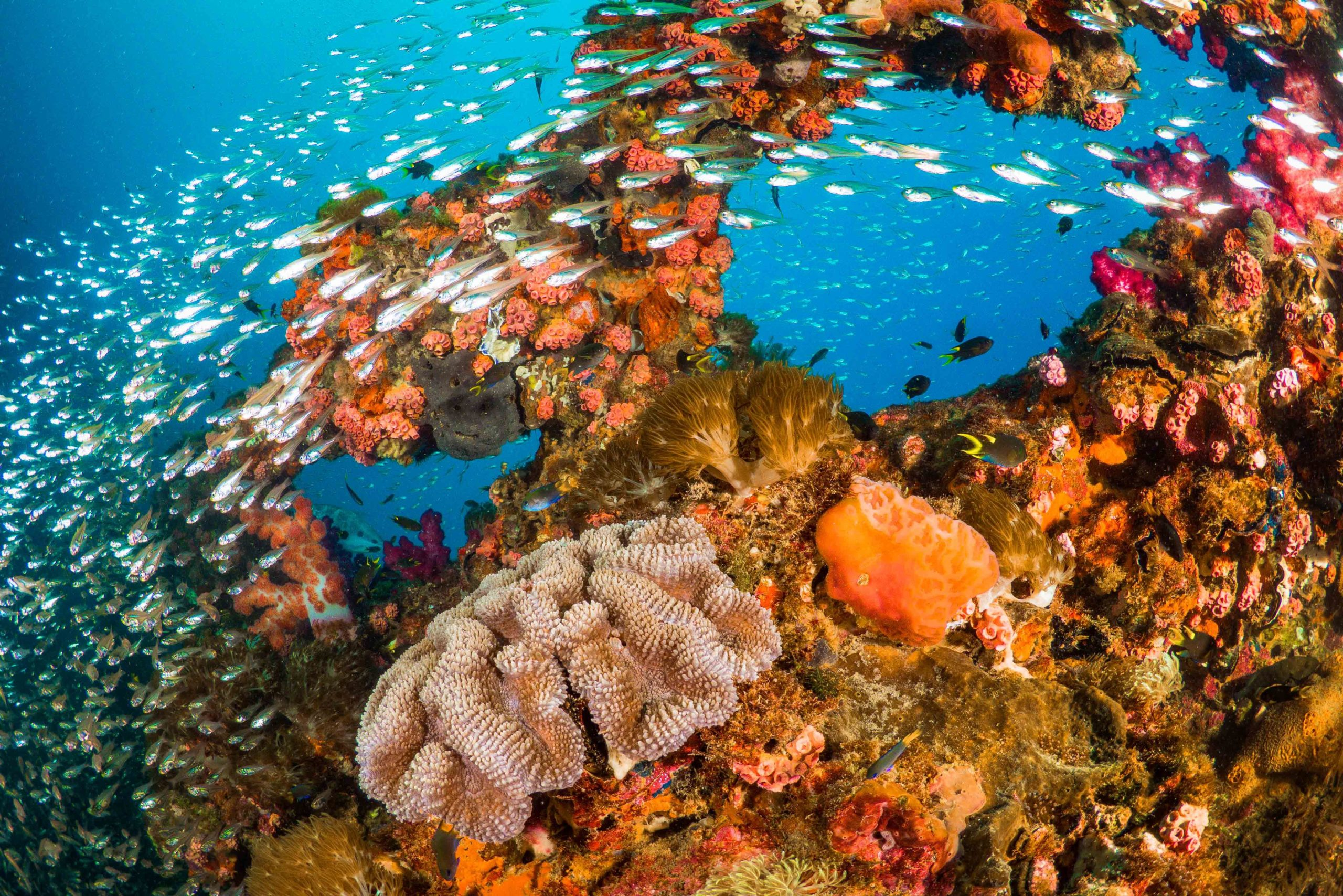 A shoal of fish swim past a vibrant artificial reef.